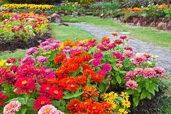 Gardening Professionals in Knightsbridge, SW1