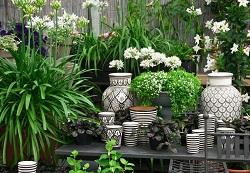 Landscape Garden Design in Knightsbridge, SW1